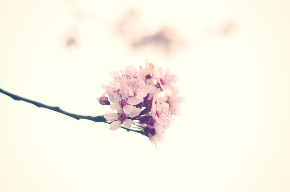 fleur1-1