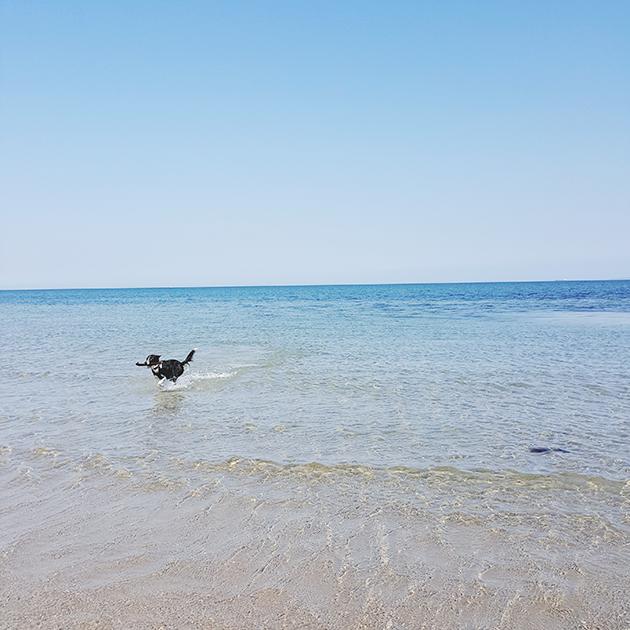 vandhund_zpslk2thkg8