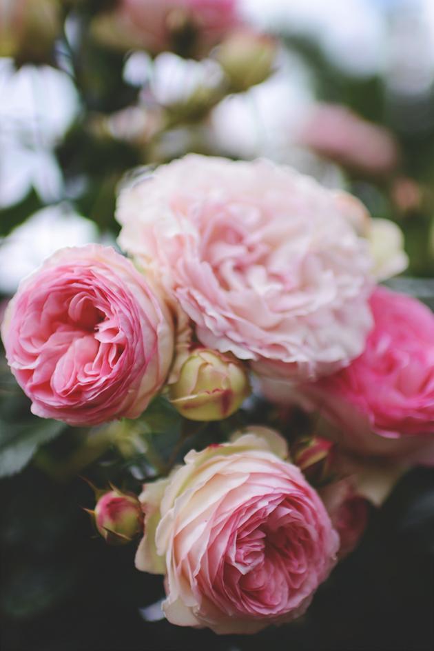 blomster_zpsofezzvvj