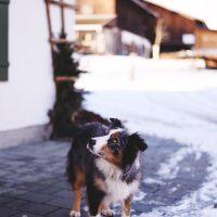 hundeven