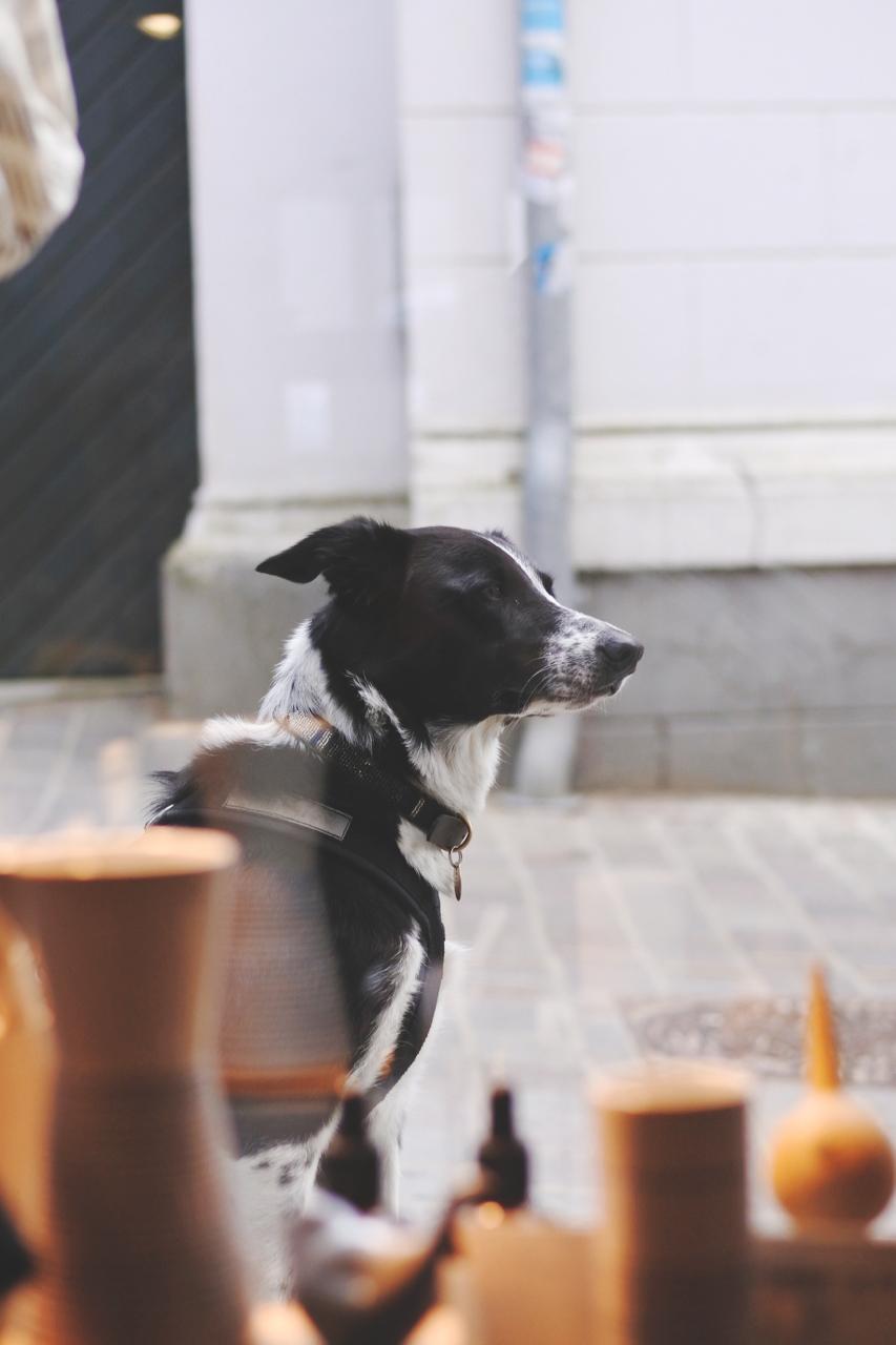 ventehund