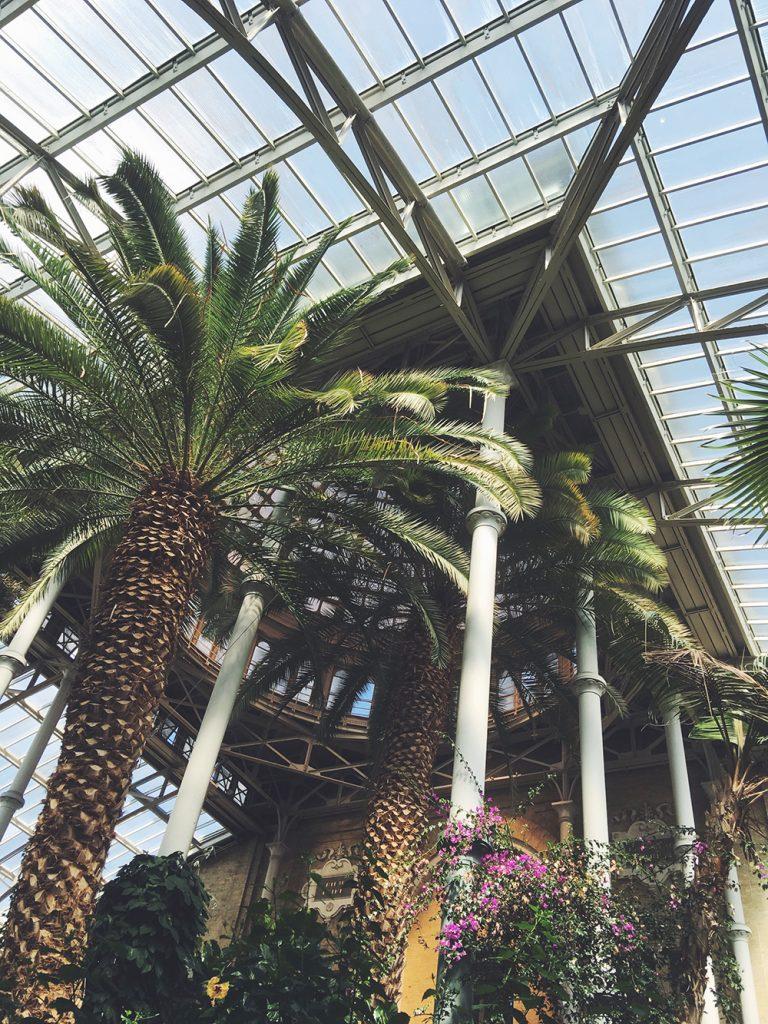 Glyptoteket palmer