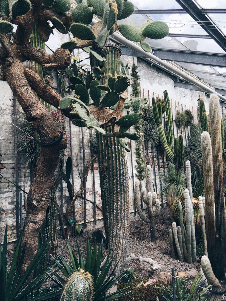 botaniks have kaktus