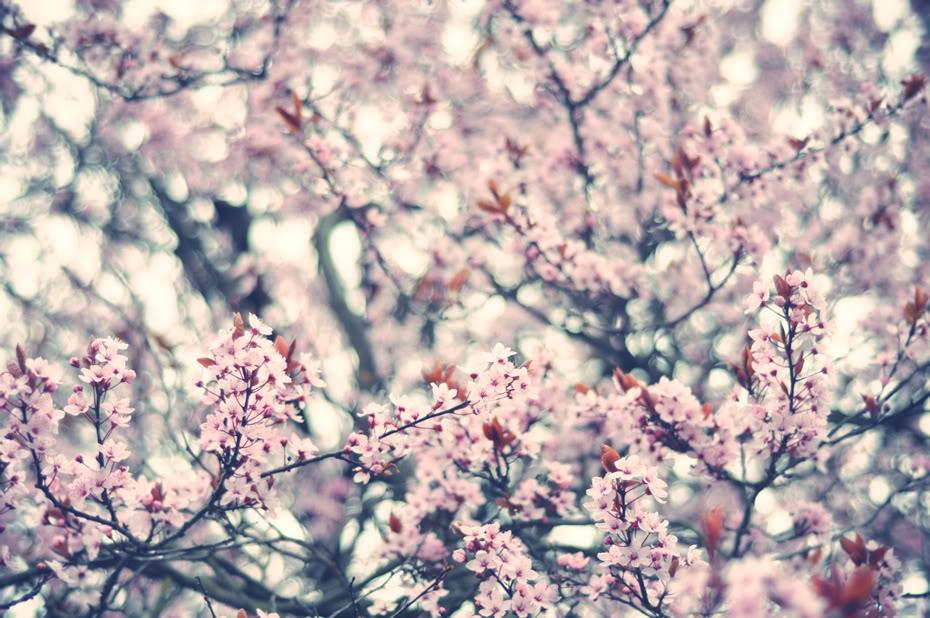 fleur3-1
