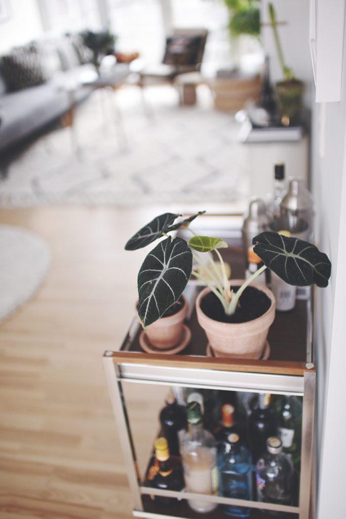 detalje grøn plante
