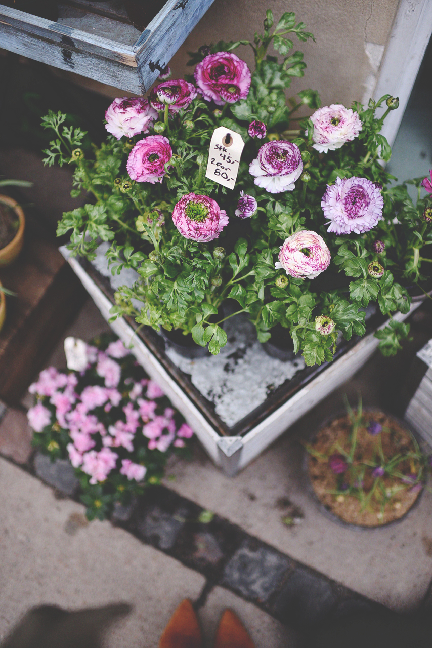 hver dag af øjeblikkets blomst
